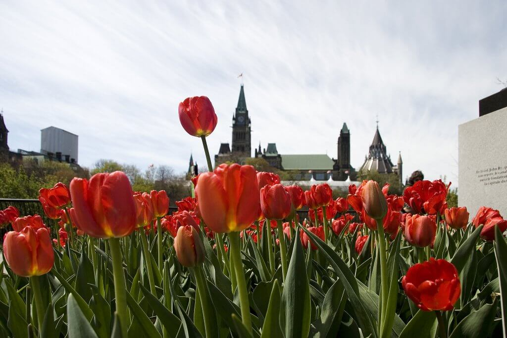 Tulip Festival in Ottawa.